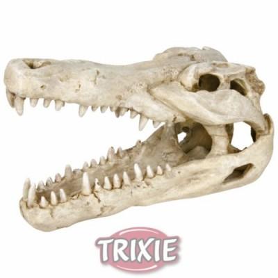 Cráneo Cocodrilo, 14 Cm