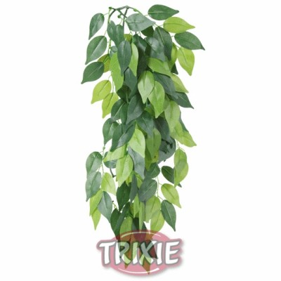 Planta Seda Colgante Terrarios Ficus, Ø 20X30 Cm