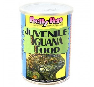Pretty Juvenile Iguana 454 Gr