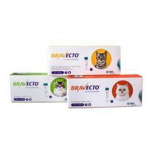 Bravecto Spot on Gato