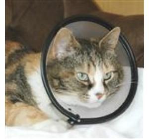 Smart Collar Cat