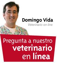 Veterinario en linea.